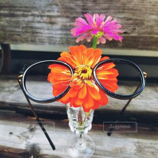 お花のメガネ。の写真・画像素材[3641550]