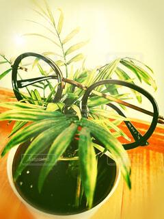観葉植物とメガネ。の写真・画像素材[3651591]