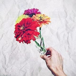 花,ピンク,赤,カラフル,花瓶,黄色,鮮やか,オレンジ,手持ち,人物,グラス,ポートレート,ライフスタイル,手元,四色