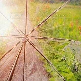 細道と傘です。の写真・画像素材[3680229]