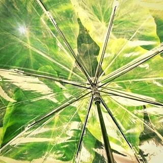 緑と傘です。の写真・画像素材[3680231]