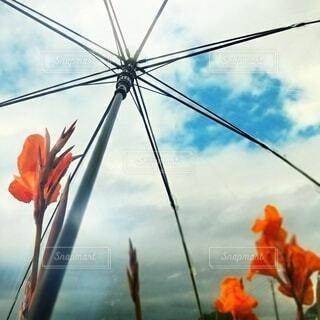 カンナと傘です。の写真・画像素材[3680273]