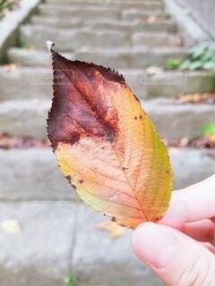 落ち葉です。の写真・画像素材[3688037]