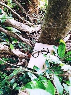 自然と本とメガネです。の写真・画像素材[3698745]
