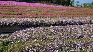花畑のクローズアップの写真・画像素材[3530468]