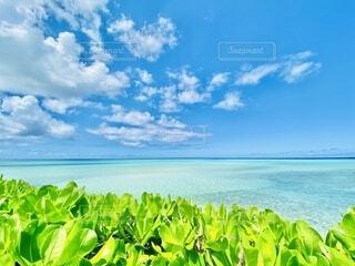 池間島の絶景の写真・画像素材[3786855]