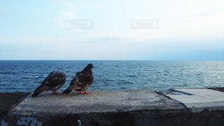 鳥の写真・画像素材[3535482]