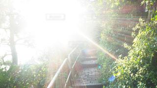 森の回廊の写真・画像素材[3535488]