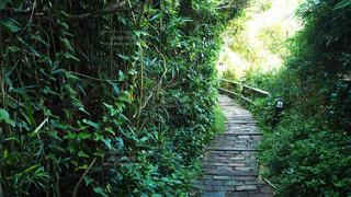 森の回廊2の写真・画像素材[3535492]