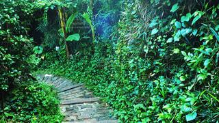 森の回廊の写真・画像素材[3535495]