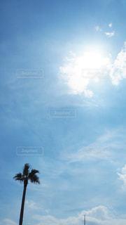 ヤシの木と、そこにある空の写真・画像素材[3535494]