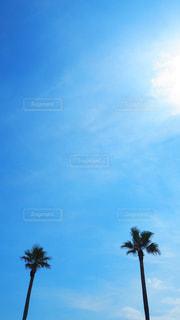 ヤシの木と、そこにある空2の写真・画像素材[3535493]