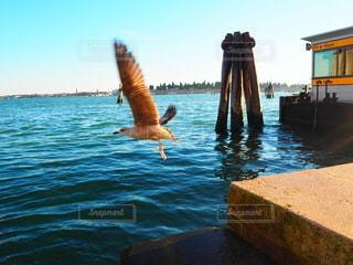 ベニスの鳥の写真・画像素材[3538414]