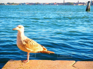水の体の隣に立っている鳥の写真・画像素材[3549501]