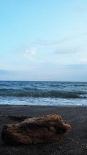 海の隣の流木の写真・画像素材[3551690]