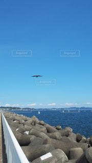 七里ヶ浜の鳥の写真・画像素材[3551697]