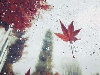 雨の日にの写真・画像素材[3806100]