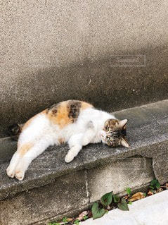 横たわっている猫の写真・画像素材[3534278]