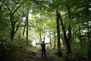 森の中の私の写真・画像素材[3576129]