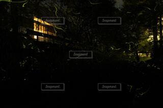 ホタルの群れの写真・画像素材[4504493]