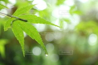 梅雨の終わりにの写真・画像素材[3539784]