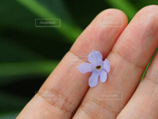 花,緑,植物,青,手,景色,花びら,手持ち,人物,小さい,ポートレート,ライフスタイル,手元,物