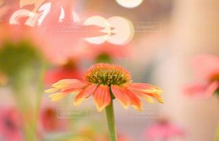 光の中の花の写真・画像素材[3545177]