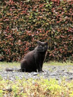 黒猫との出会いの写真・画像素材[3555174]