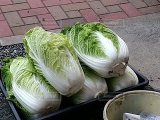 食べ物,野菜,食品,葉野菜,食材,フレッシュ,白菜,ベジタブル