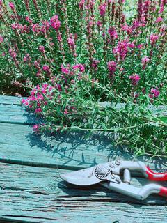 近くの花のアップの写真・画像素材[729805]