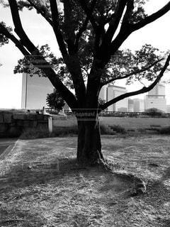 木立ちと高層ビル群の写真・画像素材[3578015]