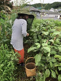 食べ物,野菜,食品,新鮮,収穫,食材,フレッシュ,ベジタブル,ガーデン