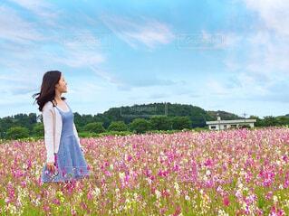 金魚草の花畑の写真・画像素材[4523527]