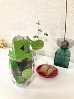 コーヒー,屋内,緑,花瓶,植木鉢,壁,食器,ティータイム,観葉植物