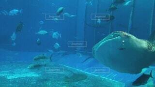 海,動物,魚,イルカ,水族館,水面,葉,泳ぐ,水中,生き物,サメ,ダイビング,海獣,スイミング プール