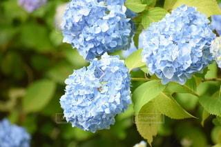 花のクローズアップの写真・画像素材[3559475]