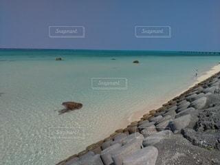 海の隣の砂浜の上に座っている鳥の写真・画像素材[3562525]