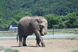 土の上に立っている赤ん坊の象の写真・画像素材[3563158]