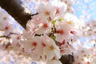 花のクローズアップの写真・画像素材[3563185]