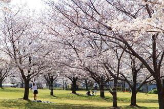 公園の大きな木の写真・画像素材[3563188]
