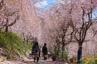 木の隣の小道を歩いている人々のグループの写真・画像素材[3563189]