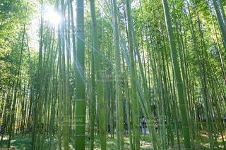 森の中の植物の写真・画像素材[3563196]