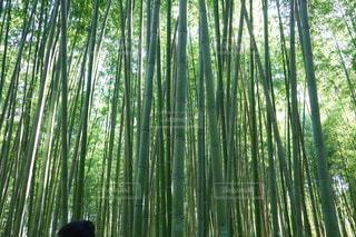 木のクローズアップの写真・画像素材[3563198]