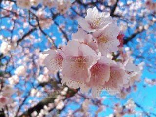 花のクローズアップの写真・画像素材[3591775]