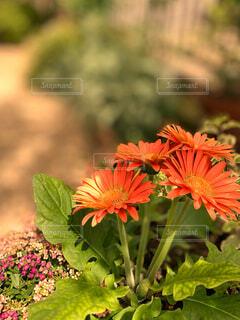 きれいな花の写真・画像素材[4357253]