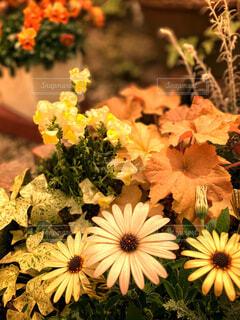きれいな花の写真・画像素材[4357256]