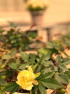 きれいな花の写真・画像素材[4358488]