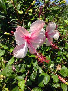 花の写真・画像素材[151217]