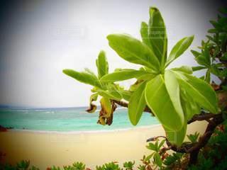 海辺の植物の写真・画像素材[3570368]