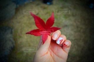 花を持つ手の写真・画像素材[3685852]